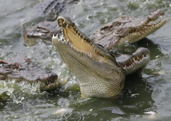 The Achna crocodile park at the Environment Committee