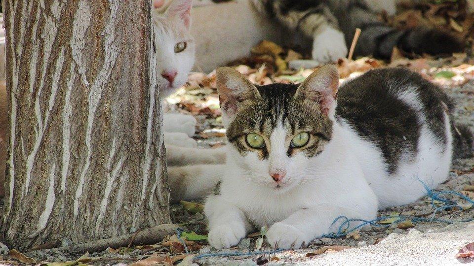 Cat, Animal, Cute, Kitten, Adorable, Aware, Playing