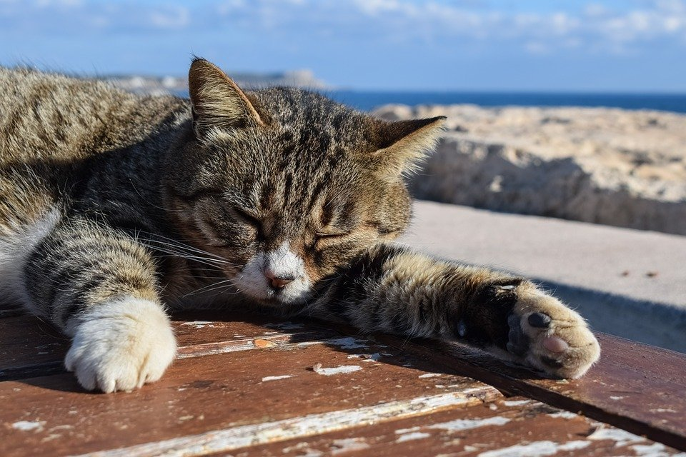 Cyprus cats: the cutest islanders