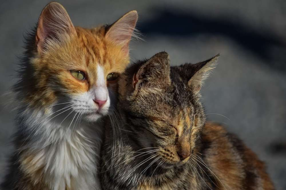 Coronavirus: Animal Party in plea for cat food