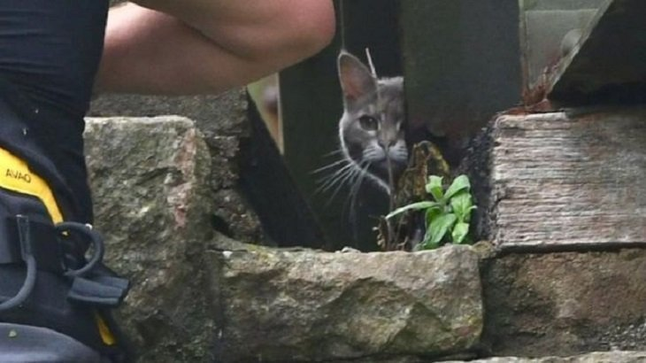 Cat 'stranded' on bridge for six days walks home after £5