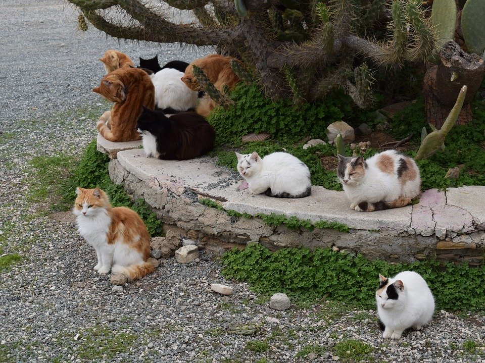 Cats, Feral, Feline, Animal, Outdoor, Resting, Together