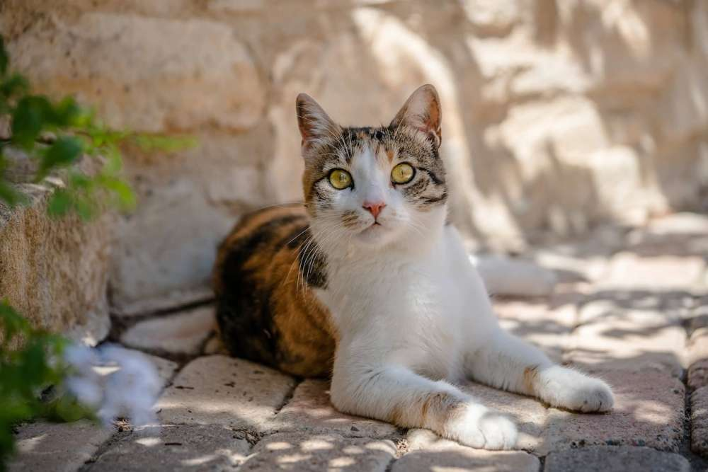 Cypriot resorts installing 'cat hotels' for strays - The Telegraph