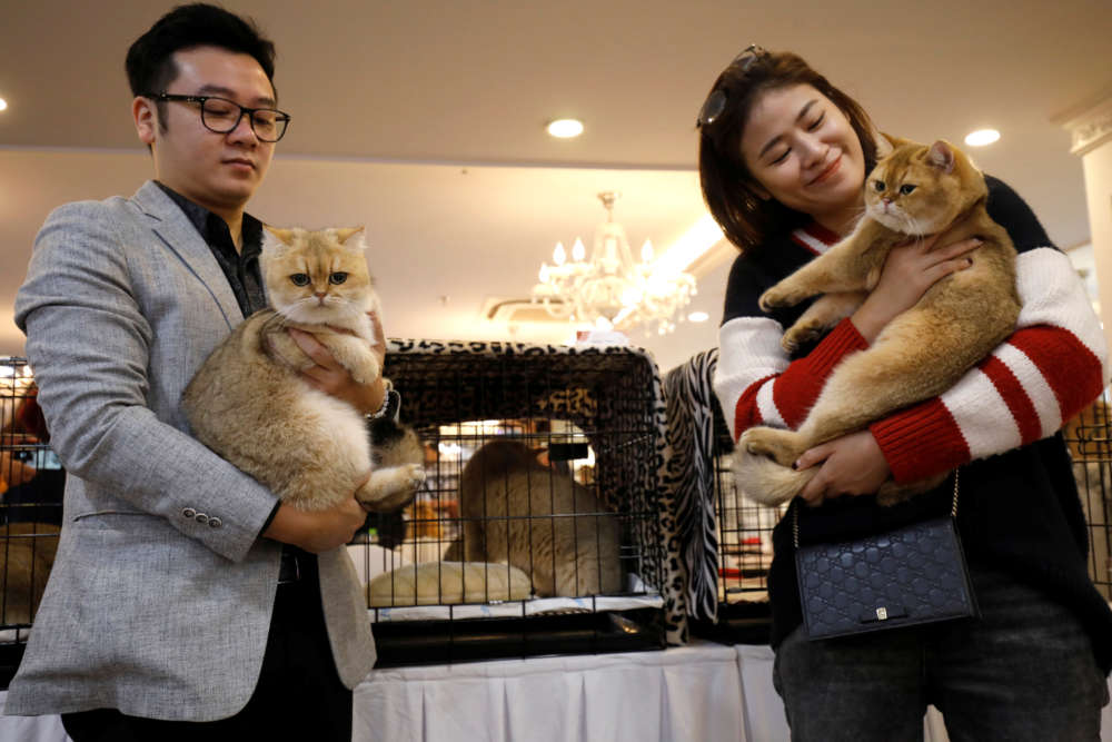 Fancy felines hit Hanoi for first ever cat show