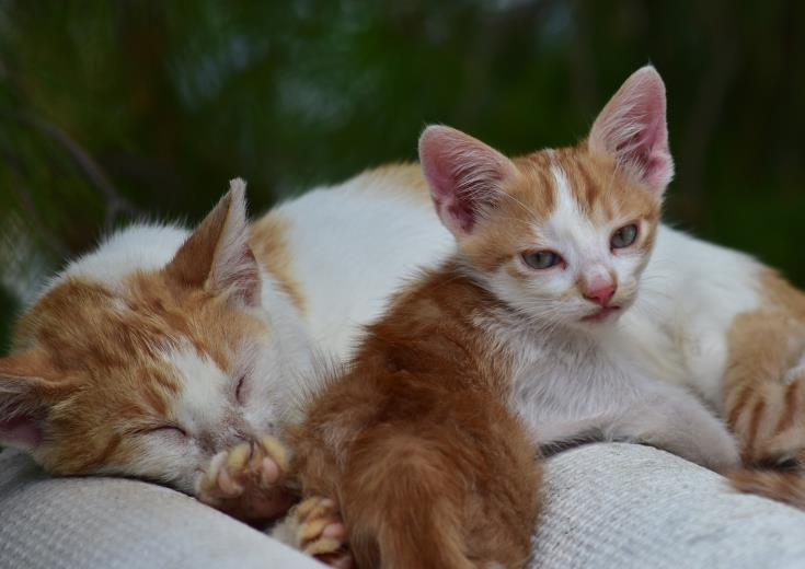 Larnaca Municipality says feeding of stray cats only at 'designated areas'