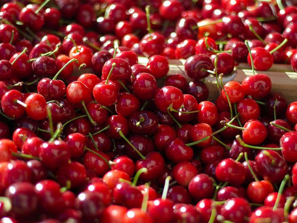 Cherry Festival at Treis Elies