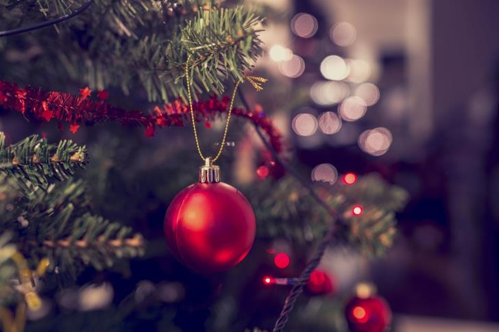 Forestry Department: Christmas trees go on sale on Monday