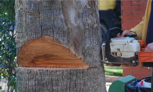 Ecologists Movement: Trees illegally cut down in Nicosia