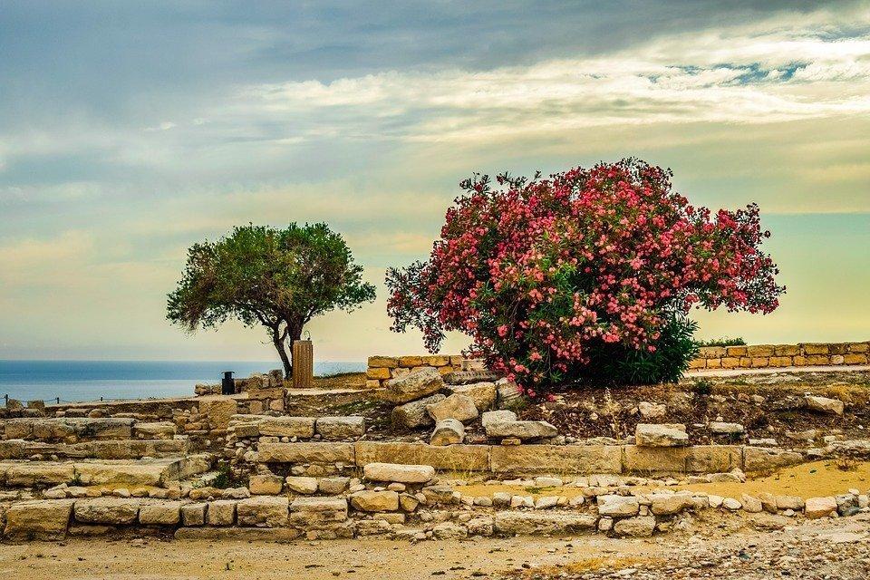 Cyprus, Kourion, Landscape, Trees, Sky, Clouds, Horizon