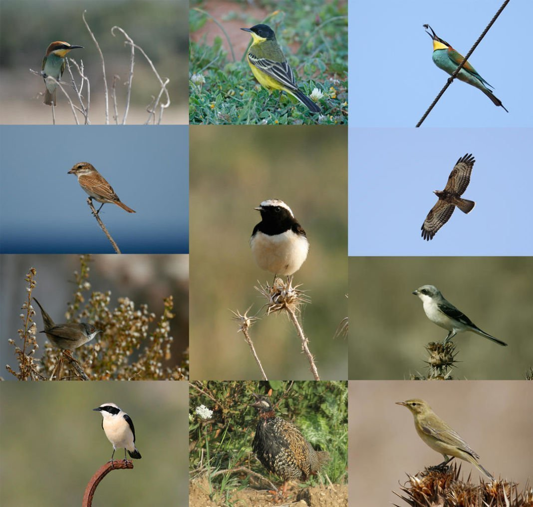 BirdLife Field Meetings 2018 - November 2018