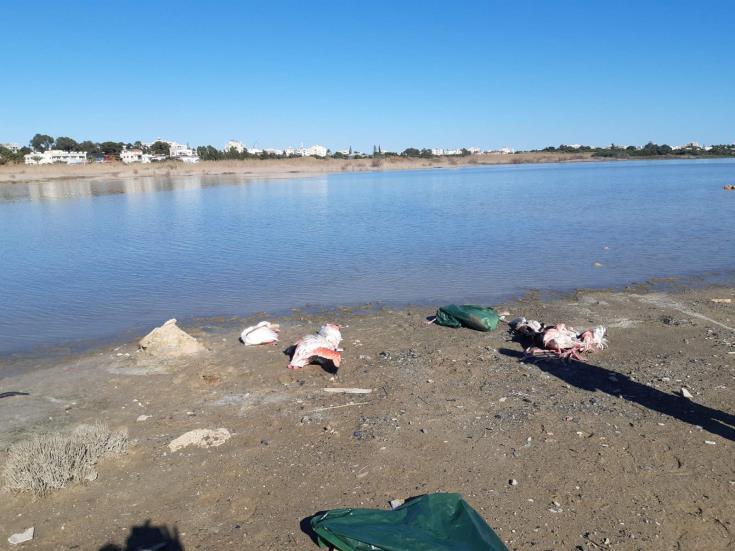 Larnaca: two more dead flamingos at salt lake