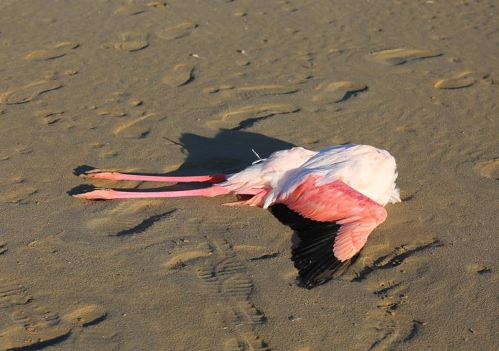 Shockingphotos of dead flamingos at Larnaca salt lake
