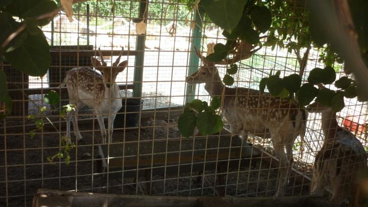 Animal rights group protests caged deer at Peyia home