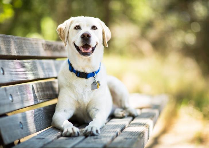 Larnaca: Citizens lobby for dog park