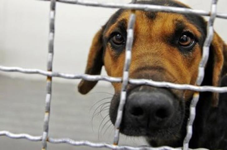 Diko proposes tougher penalties for animal abuse