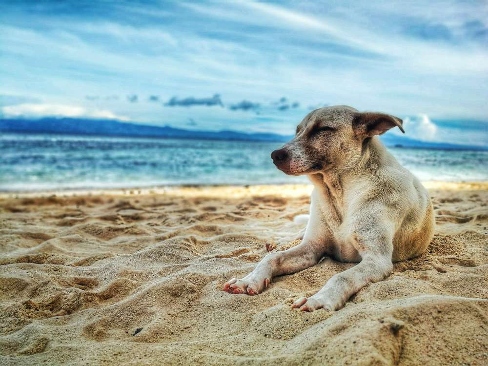 Which beaches welcome dogs this summer?