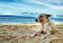 Animal Party slams dog beaches as unsuitable