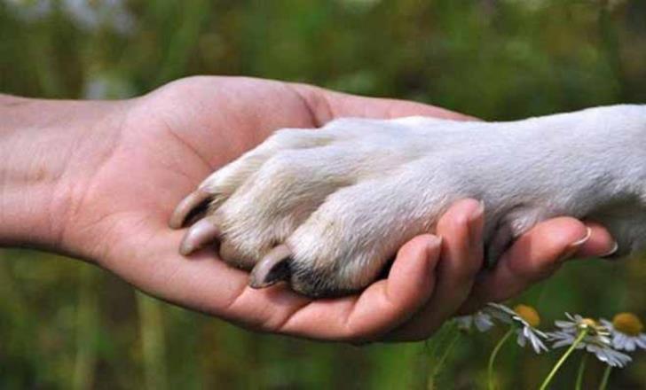 Animal volunteers in plea for help