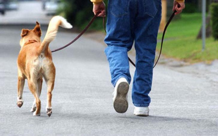 Dog owners to protest Molos ban on Sunday