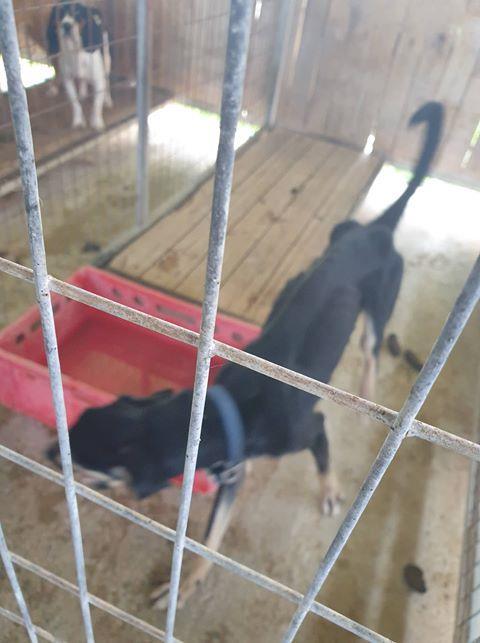 Yeri mayor: Dog pound conditions neither atrocious