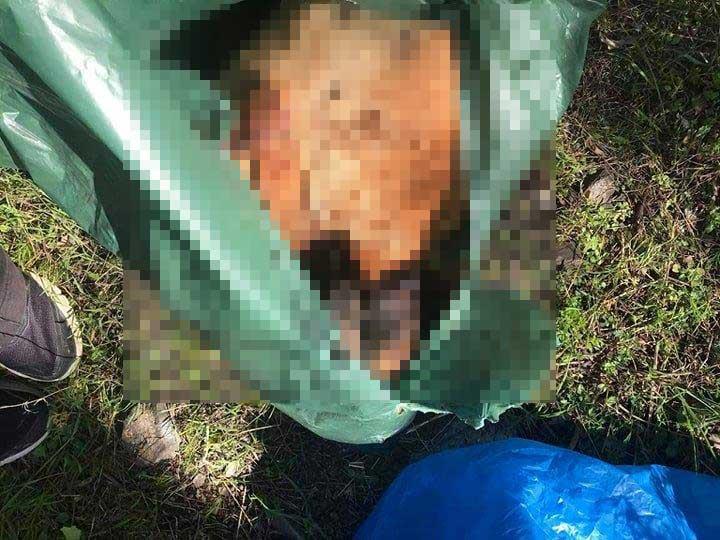 Dogs found shot to death in Stavrovouni