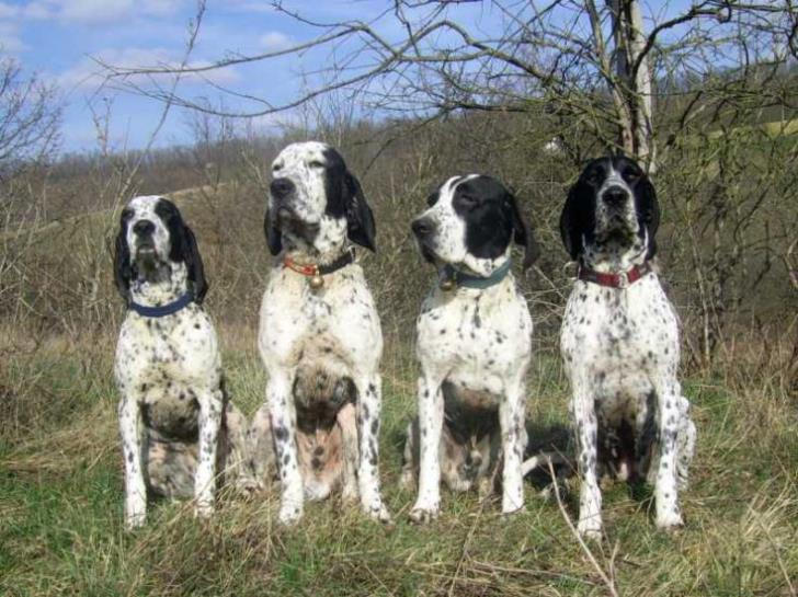 Six hunting dogs stolen in Paphos