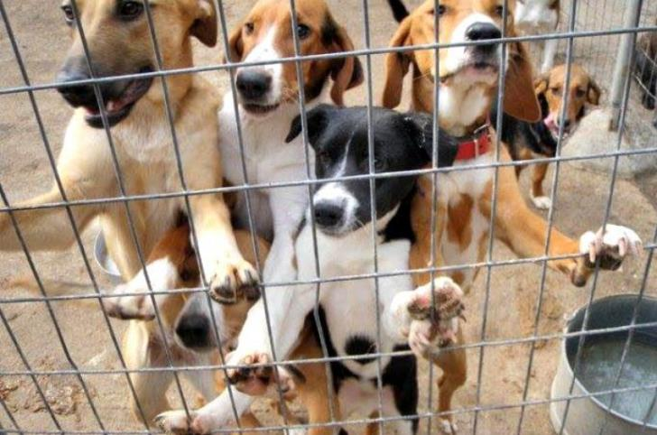 Agriculture Ministry: Adopt from a shelter