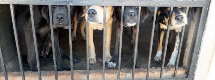 Paphos dog owner arrested on animal welfare charges
