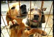 Ministry to set up 'model' shelters for stray dogs