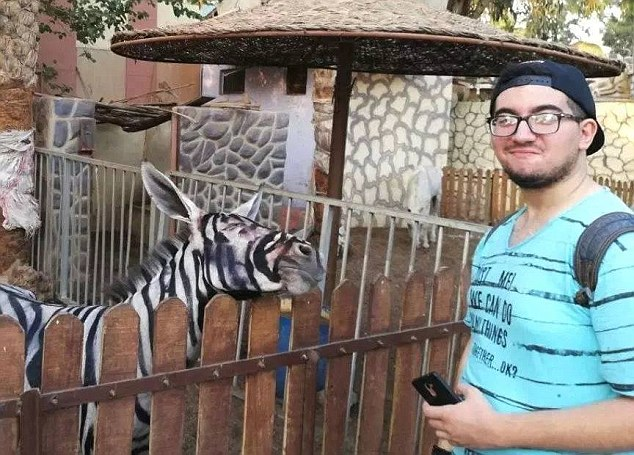 Cairo zoo accused of painting donkey to look like zebra