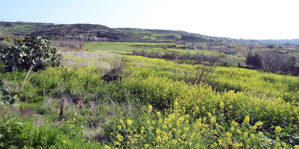 Ezousa Walking Trail (Circular)
