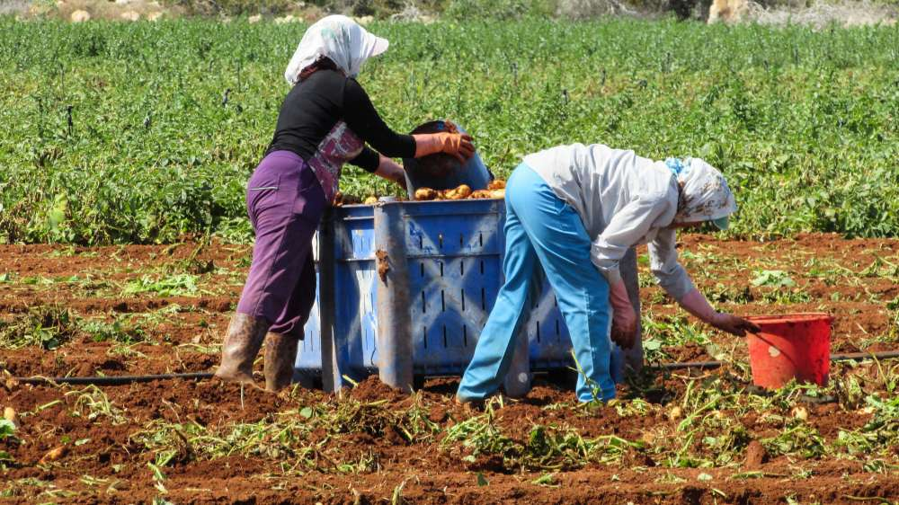Cyprus among EU countries with lowest share of organic farming area