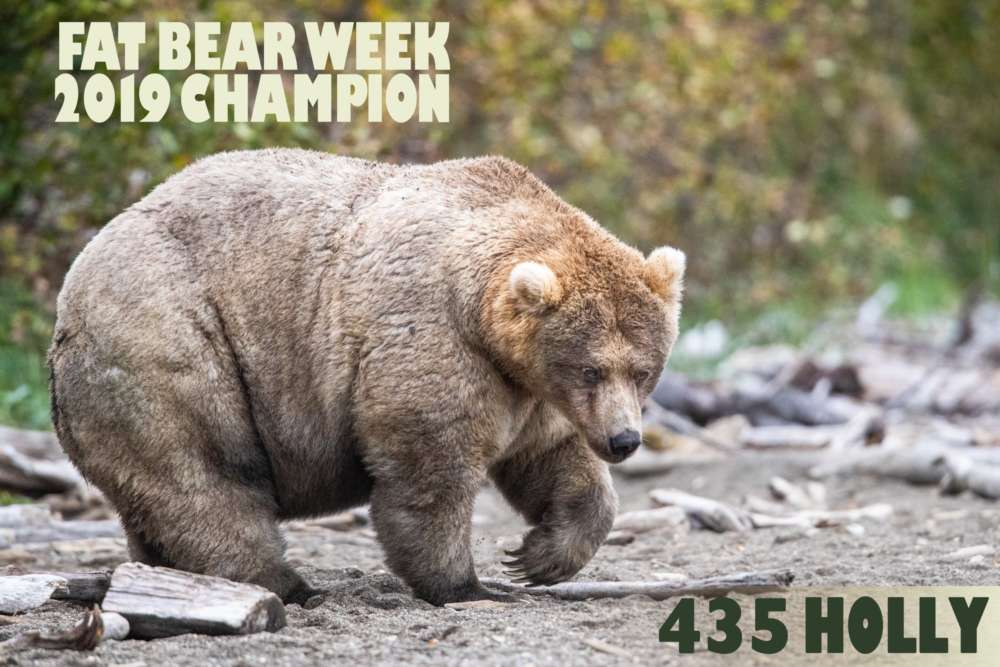Alaska's Fat Bear contest crowns Holly 'Queen of Corpulence'