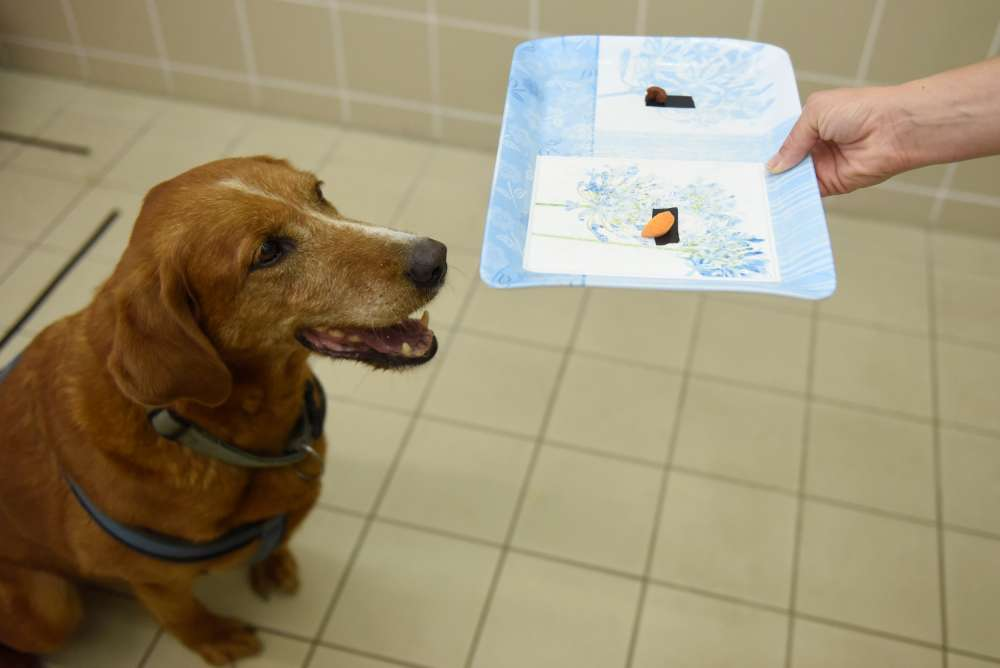 Dog law up for public consultation