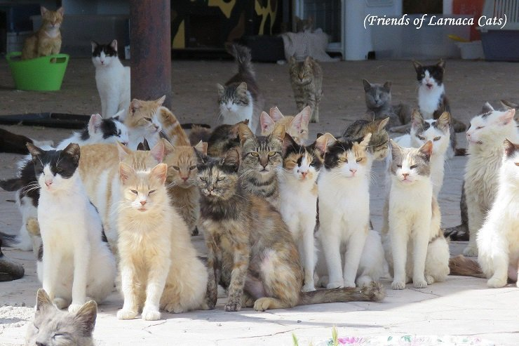 Who cares about the stray cats of Larnaca?