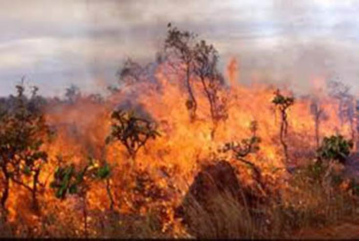 Buffer zone fire near Paralimni buffer zone burns dry grass