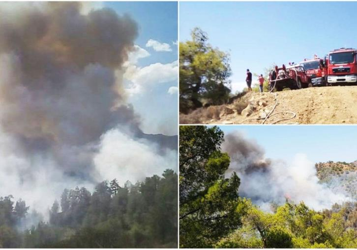 Update: Machairas forest fire under full control (videos)