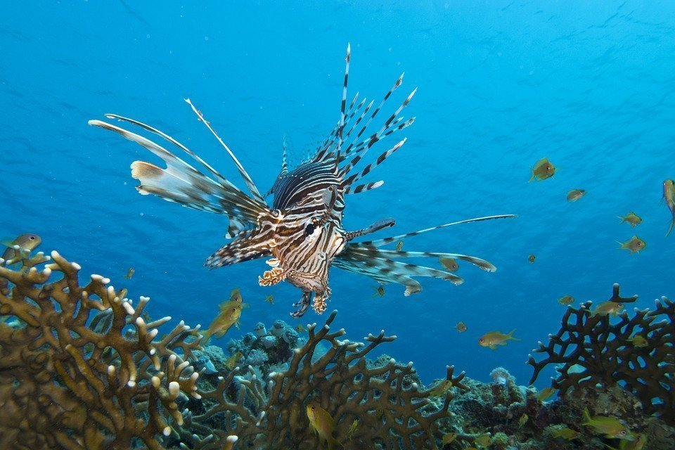 3rd Lionfish Removal Derby for experienced divers