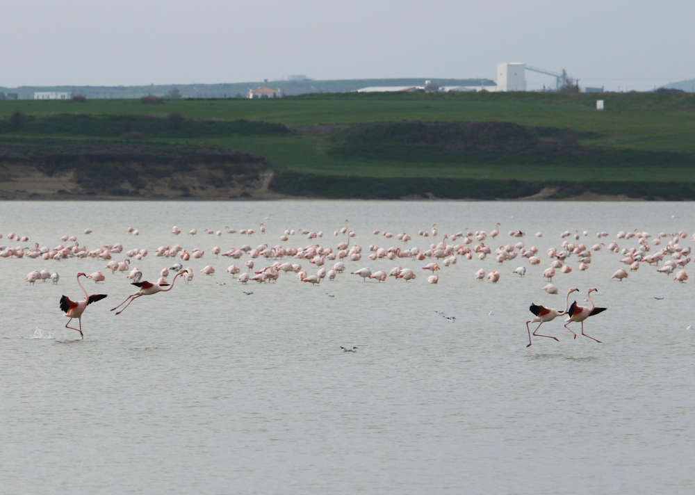 BirdLife Cyprus says flamingos' deaths 'worrying'