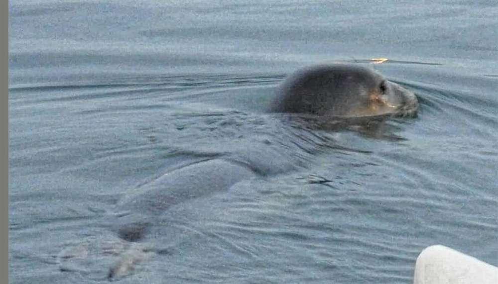 Paphos: Two seals make appearance at Dimotika Bania