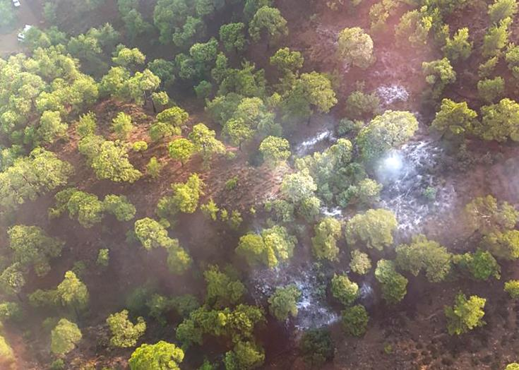 Paphos forest fire sparked by thunder under full control