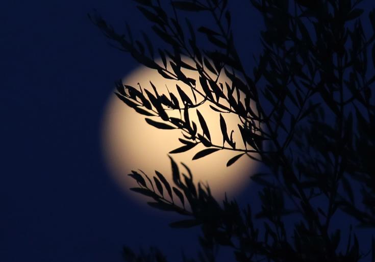 August's full moon tonight