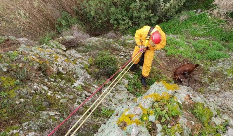 Fire service rescues baby goat from cliff in Larnaca (video+pictures)