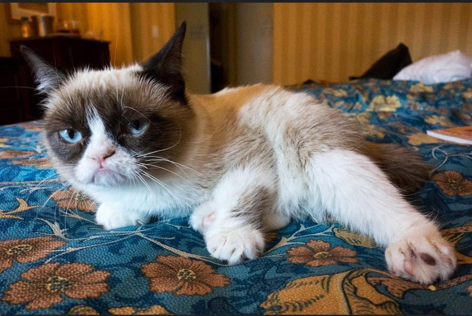 Internet celebrity Grumpy Cat
