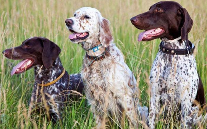 Moves to ensure dogs used for hunting have microchip