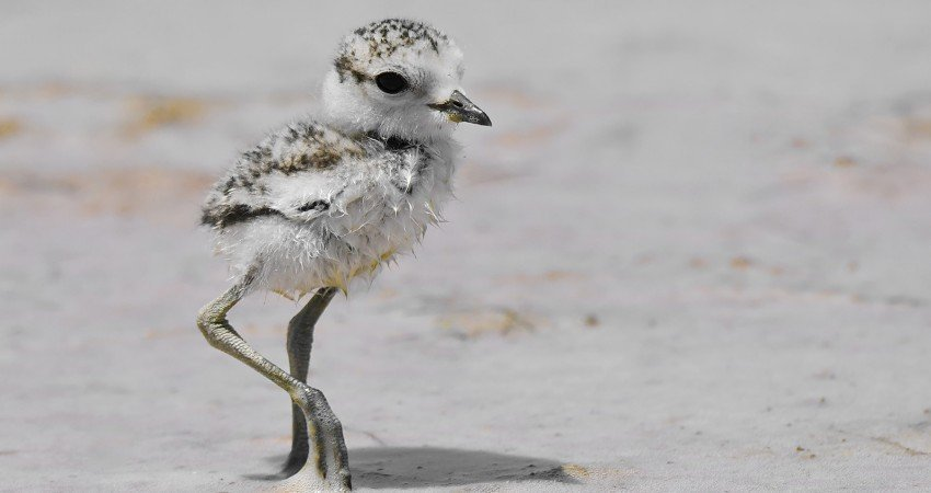 BirdLife concerned about impact of beach concert on protected birds