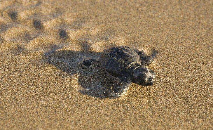 BirdLife Cyprus calls on Akamas communities to respect Lara turtle beach