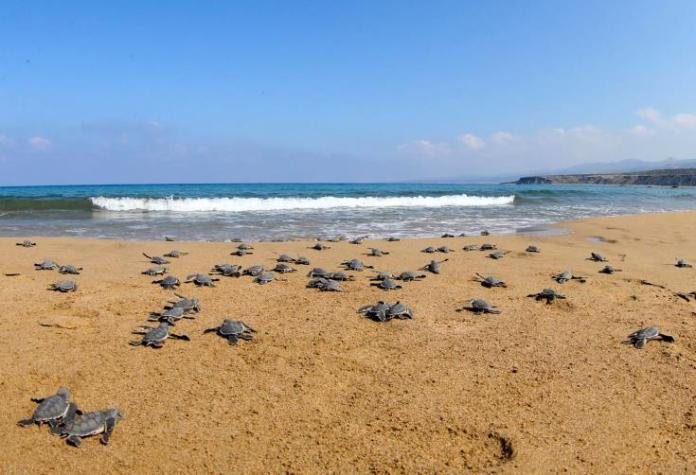 Fisheries Dept says zero tolerance for law violations at Lara turtle beach