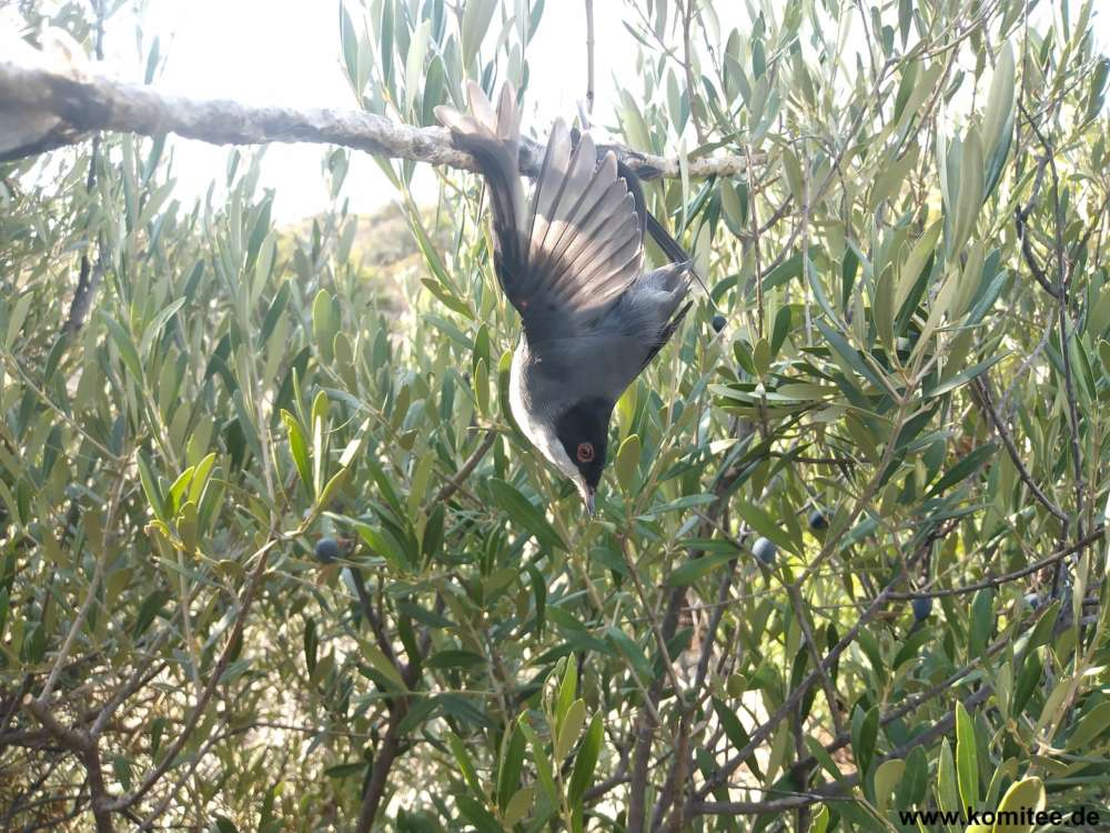 Huge bird trapping site discovered
