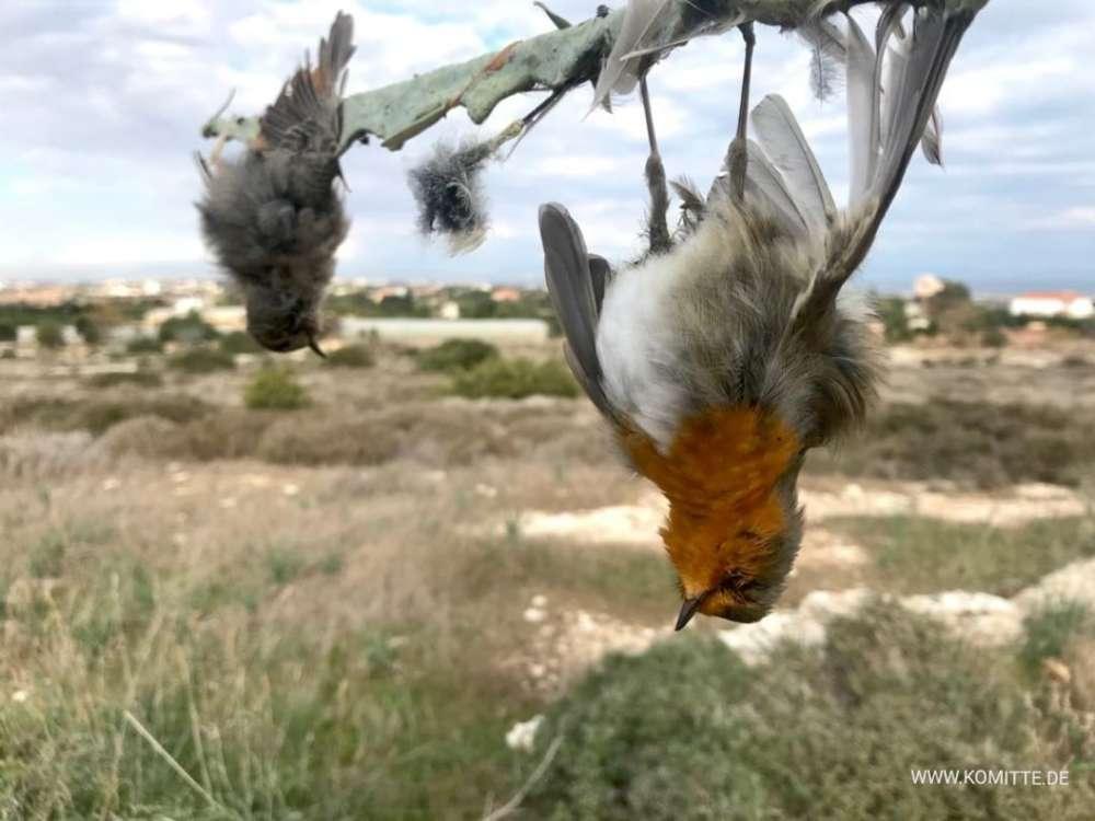 Forgotten limestick highlights plight of birds in Cyprus